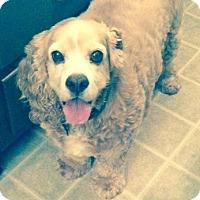 Adopt A Pet :: Vinnie - Sacramento, CA