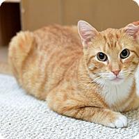 Adopt A Pet :: Bisby - St. Louis, MO