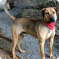 Adopt A Pet :: Judge - Dalton, GA