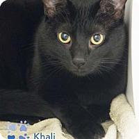 Adopt A Pet :: Khali - Merrifield, VA