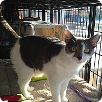 Adopt A Pet :: Phantom - Horsham, PA