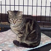 Adopt A Pet :: Jed - Morganton, NC