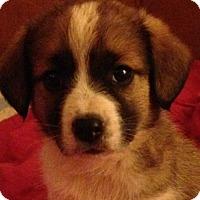 Adopt A Pet :: Taffy - Trenton, NJ