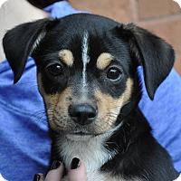 Adopt A Pet :: Chloé - Atlanta, GA