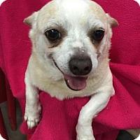Adopt A Pet :: Hogan - Centerville, GA