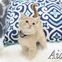 Adopt A Pet :: Aiden $85 Male Kitten - knoxville, TN
