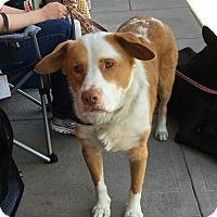 Adopt A Pet :: Tucker - Pleasanton, CA