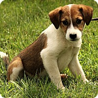 Adopt A Pet :: Libby - Spring Valley, NY
