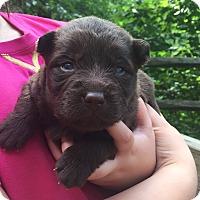 Adopt A Pet :: Hershey - Hazard, KY