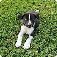 Adopt A Pet :: Prince Charles - Aurora, CO