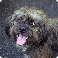 Adopt A Pet :: Draco - Bradenton, FL