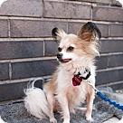 Adopt A Pet :: BOBBY MOYNIHAN