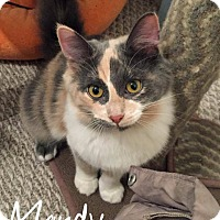 Adopt A Pet :: Mandy - URGENT - Troy, MI