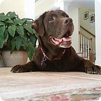 Adopt A Pet :: Coco #3 - Buckeystown, MD