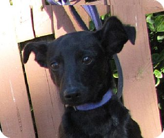 Terrier (Unknown Type, Medium) Mix Dog for adoption in Oakland, Arkansas - Onyx
