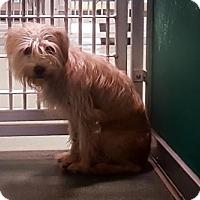Adopt A Pet :: SANDY - West Palm Beach, FL