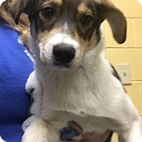 Adopt A Pet :: Roxanne - available 12/17 - Sparta, NJ