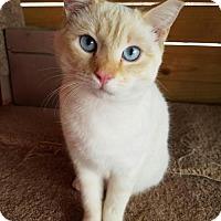 Adopt A Pet :: SWEET CHEEKS - Franklin, TN
