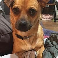 Adopt A Pet :: Jasper - Summerville, SC