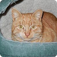 Adopt A Pet :: Rollo - CARVER, MA
