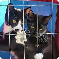 Adopt A Pet :: SIMON & SAM - Ocala, FL