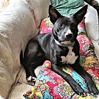 Adopt A Pet :: Pepper - Petersburg, VA