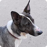 Adopt A Pet :: Wendy - Liberty, MO