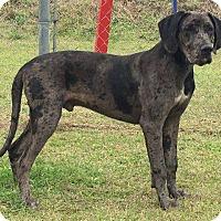 Adopt A Pet :: Moose - Waycross, GA
