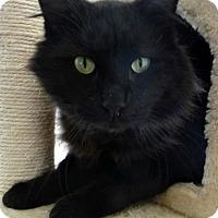 Adopt A Pet :: Bosco - Encinitas, CA