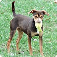 Adopt A Pet :: FABULOUS FLOYD - Andover, CT
