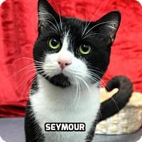 Adopt A Pet :: Seymour - Hot Springs Village, AR
