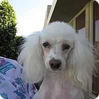 Adopt A Pet :: Dharma - Fort Braff, CA