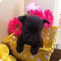 Adopt A Pet :: Jasmine - Inglewood, CA