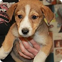 Adopt A Pet :: Taryn (PENDING!) - Chicago, IL