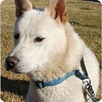 Adopt A Pet :: Chico - Marysville, CA