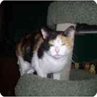 Adopt A Pet :: Charlotte Rose - Hamburg, NY