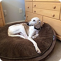 Adopt A Pet :: Baba - Santa Rosa, CA