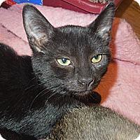 Adopt A Pet :: Raspberry - Medina, OH