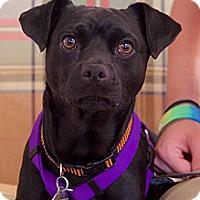 Adopt A Pet :: Vadar - Homewood, AL