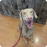 Adopt A Pet :: Tate--adopted!! - New Richmond, OH