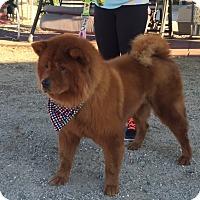 Adopt A Pet :: Brandy - Sacramento, CA