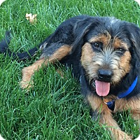 Adopt A Pet :: Kuni - Sacramento, CA