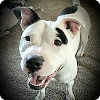 Adopt A Pet :: Lulu - Kewanee, IL