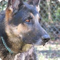 Dog Obedience Training Orange Park Fl