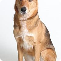 Adopt A Pet :: Grace - Roseville, CA
