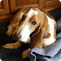 Adopt A Pet :: JOLENE - Pennsville, NJ