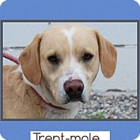 Adopt A Pet :: Trent - Harrisonburg, VA