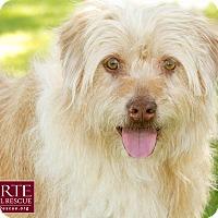 Adopt A Pet :: Chip - Marina del Rey, CA