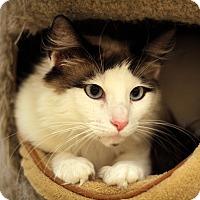 Adopt A Pet :: Butterscotch - Richmond, VA