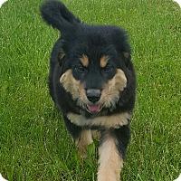 Adopt A Pet :: Harmony - New Oxford, PA